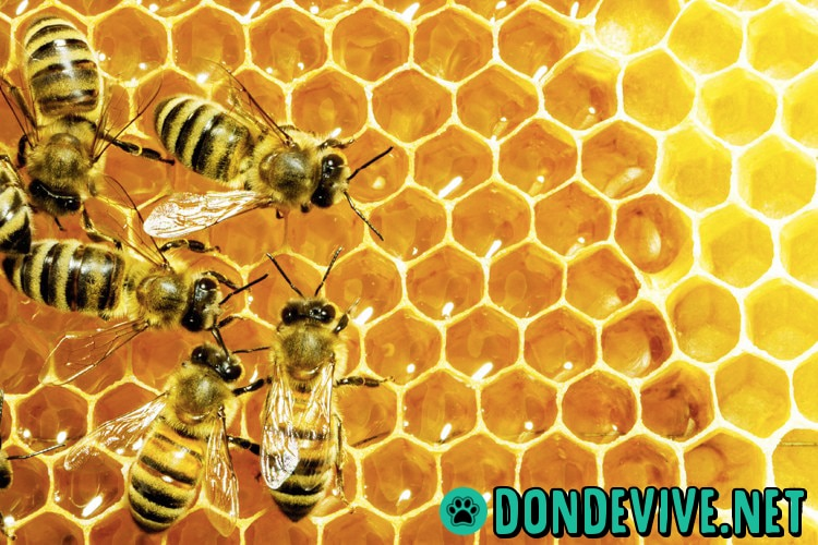 donde viven las abejas