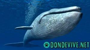 Donde vive la ballena azul