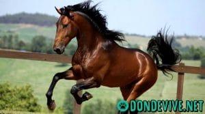 Donde vive el caballo