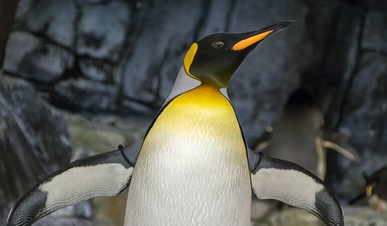 dónde vive el pinguino, hábitat y características
